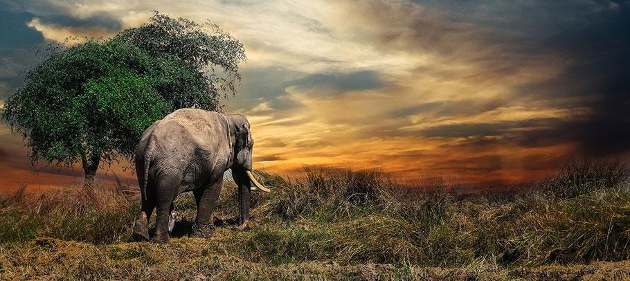 Olika typer av safariresor